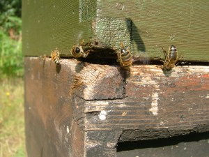 Wear and damage on hive boxes