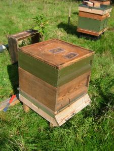 Hives are undamaged and sound