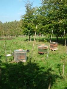 Hives preparing for winter