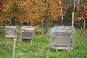Hives now ready for winter