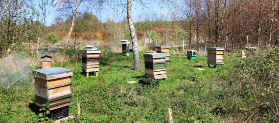 View across the new apiary site in April 2015
